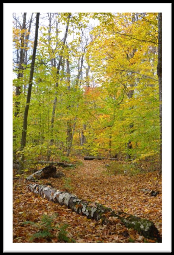Sentier l'automne